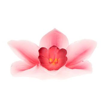 Biev - Pembe Orkide Mum